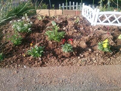 わが家の1坪畑 花を植えるだけで随分と印象が変わる・・・