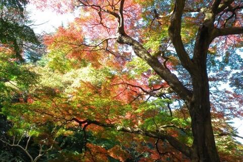 紅葉の季節ですね 久しぶりに行ってみたい