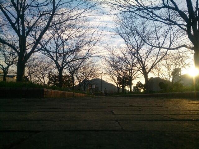 散歩道の木も葉が落ちて、季節感を感じさせてくれてます