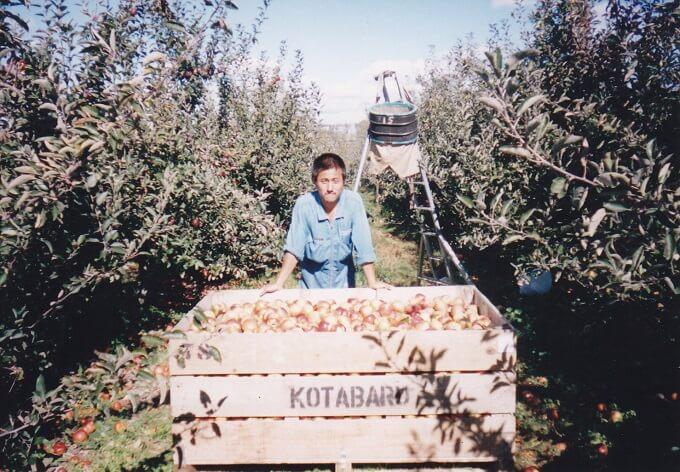ニュージーランドのりんご農園でアップルピッキングしていた頃~毎日、リンゴ食べ放題(笑)