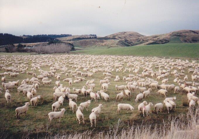 ニュージーランドで出会った風景~来年の干支ですもんね
