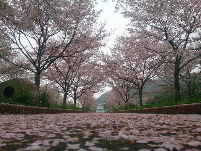 今年もたっぷり桜を満喫させてもらえました