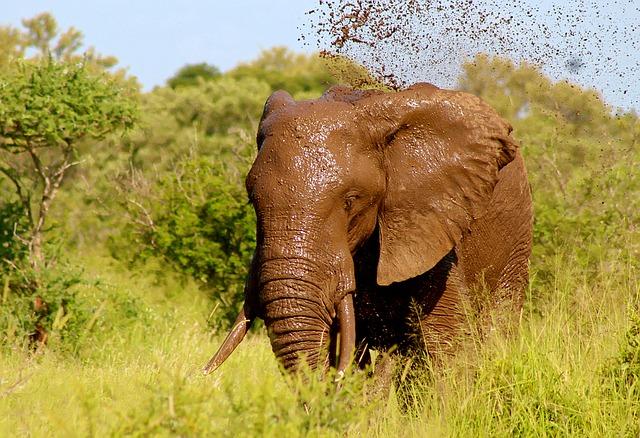象って、なんかカッコイイ~自信の「塊」のようなイメージ