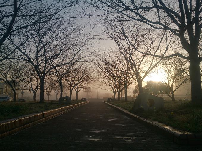 早朝に散歩すると、こんなシーンにも出逢える