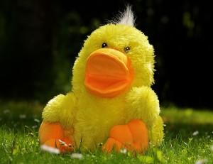 duck-783684_640