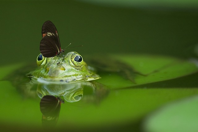 frog-540812_640